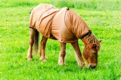 Sommerekzem Ekzem Pferd