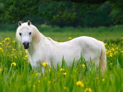 Pferden mit Sommerekzem sollte der Weidegang reduziert werden.