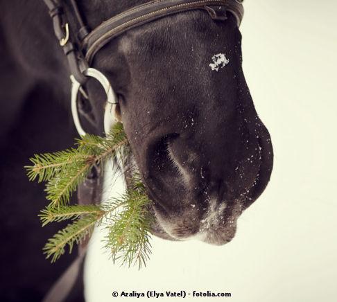 Wie giftig ist der Tannenbaum wirklich, wenn er an Pferde verfüttert wird?