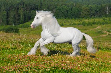Zink ist ein bedeutendes Spurenelement beim Pferd.