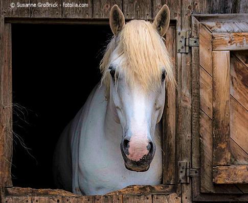 Apfeltrester im Pferdefutter. Welche Auswirkungen hat der Zucker auf den Stoffwechsel der Pferde