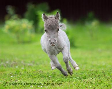 Tagesbedarf an Biotin beim Pferd ist abhängig vom Alter.