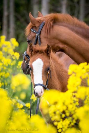 Vitamin A Bedarf des Pferdes. Wie entsteht ein Mangel an Vitamin A beim Pferd. Was tun bei Überversorgung.