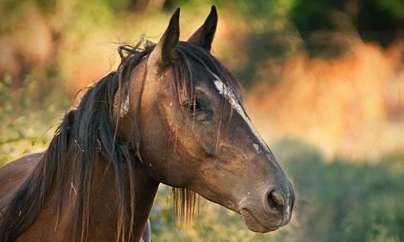was bedeutet der Wert Bilirubin im Blutbild des Pferdes