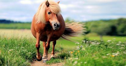 Cushing beim Pferd - alles über Behandlung, Diagnose und Fütterung des Cushingpferdes.