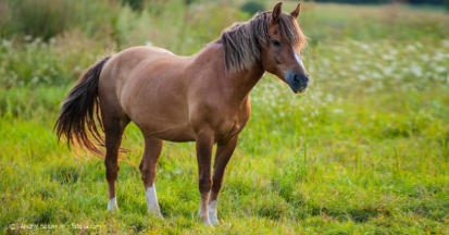 EMS beim Pferd - Symptome und Fütterung