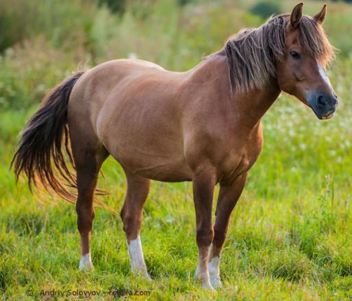 EMS beim Pferd - was füttern, welche Symptome und wie kann EMS diagnostiziert werden?