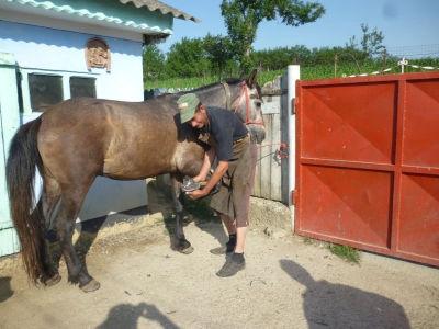 Gratisbeschlag für gute Behandlung des Pferdes durch Equiwent