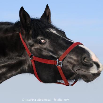 Welchen Einfluss hat die Aminosäure Tryptophan auf das Pferd?