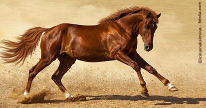 Vorteile und Nachteile von Hanfsamen und Hanföl in der Pferdefütterung.