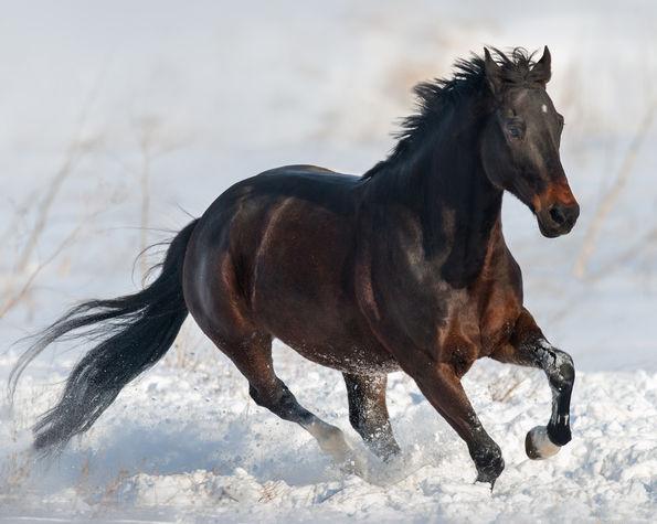 Hautpilz Beim Pferd Vorbeugen Und Behandeln