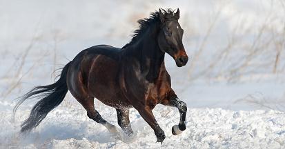 Hautpilz beim Pferd - welche Behandlung macht Sinn?