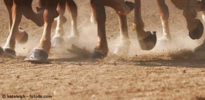 Brüchige Hufe bei Pferden. Was sind die Ursache für schlechte Hufe beim Pferd und wie kann man richtig füttern?
