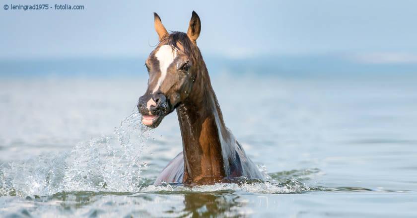 Immunsystem beim Pferd stärken