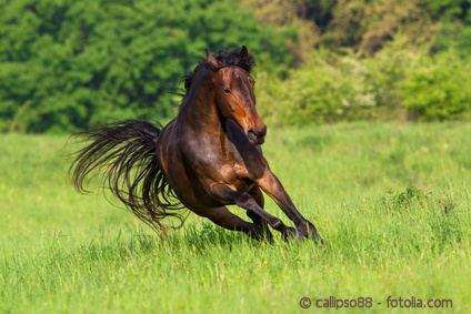Luzerne haben viel Eiweiß und Calcium. Wie gesund ist die Luzerne für das Pferd?