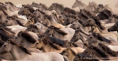 Mineral-, Energie- und Eiweißbedarf für Pferde berechnen - ein Fass ohne Boden?