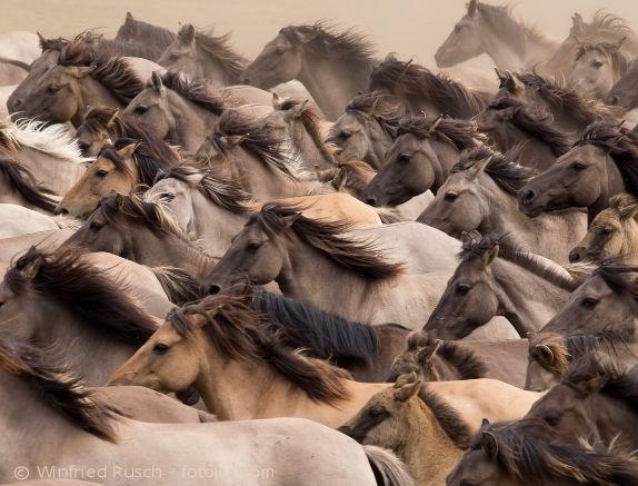 Mineralfutter für Pferde selber herstellen - wie sinnvoll ist es sich an den Wildpferden zur orientieren?