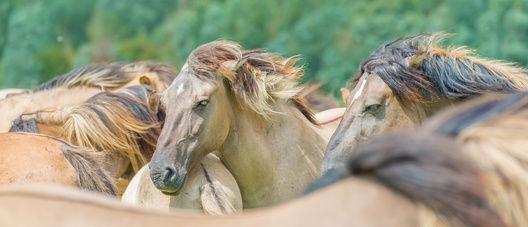 Natürliche Mineralfutter für Pferde - was ist wirklich drin?