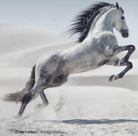 Muschelextrakt beimi Pferd - Vor und Nachteile