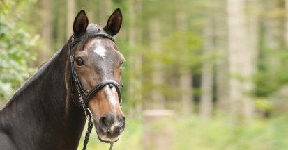 Wenn Pferde in Rente gehen.