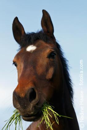 24 Stunden Weidegang ist für Pferde nicht immer gesund.