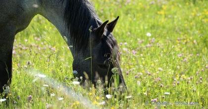 Weidepflege und Düngung für die Pferdehaltung.