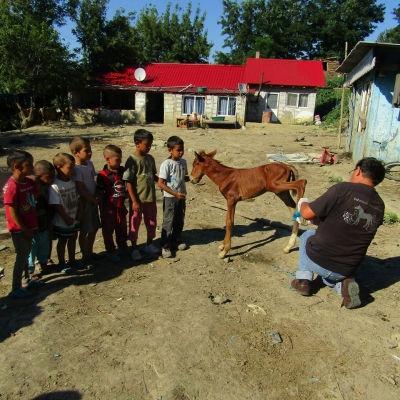 Pferdekunde für die Kleinsten