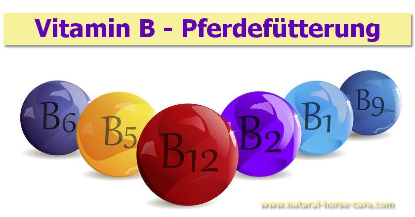 Vitamin B - Vitamine des Verdauungstraktes beim Pferd