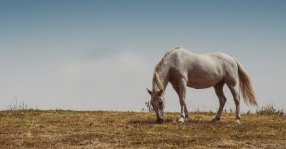 Eine abgefressene Weide birgt viele Gefahren für ein Pferd.