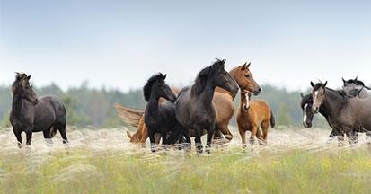 Wie lange fressen Pferde wirklich - was ist gesund?