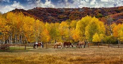 Pferdefütterung im Herbst