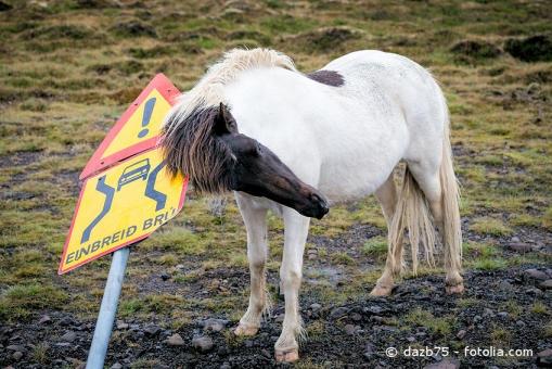 Haarlinge beim Pferd lösen extremen Juckreiz aus.