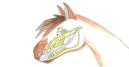 Hummeln im Kopf - warum Pferde Headshaken
