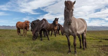 Kräuter statt Chemie - bei Pferde-Husten