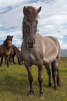 Hustenkräuter für Pferde können eine natürliche Alternative bei Atemwegsbeschwerden, Husten usw. sein.