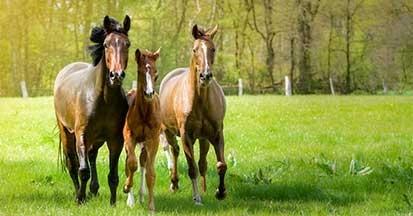 Mineralfutter fürs Pferd - füttern Sie gesund.