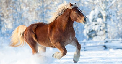 Dämpfiges Pferd - Symptome, Ursachen und Fütterung