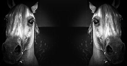 Treffen Sie Vorbereitungen - Silvester Pferd!