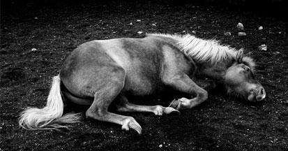 Vergiftungen beim Pferd - wie behandeln, was tun?