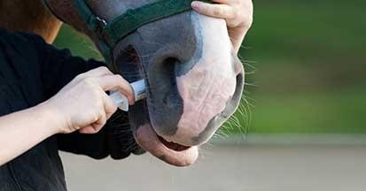 Wurmkur beim Pferd - wann und wie oft das Pferd entwurmen